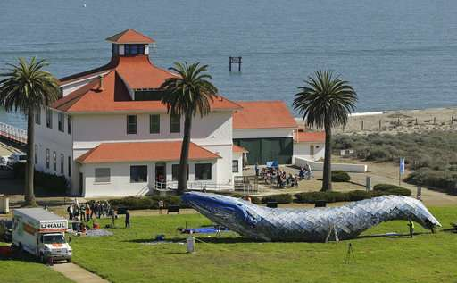 Life-sized plastic whale to raise ocean pollution awareness