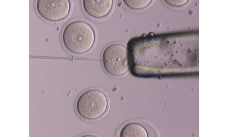 Like babies, eggs send signals when 'hungry'