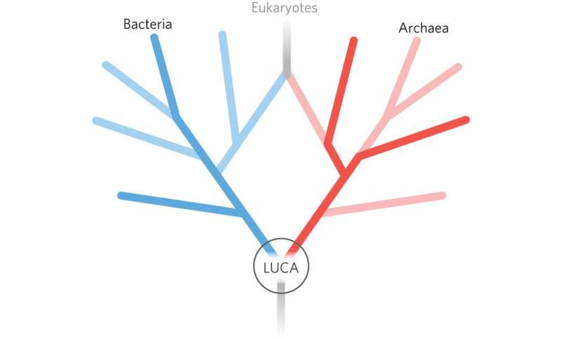 Looking for LUCA, the last universal common ancestor