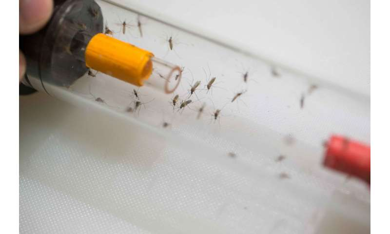 Mosquitoes bite when thirsty, too
