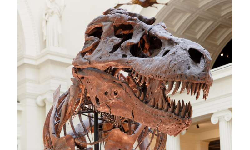 New clues unearthed about mammals' rapid evolution after dinosaur extinction