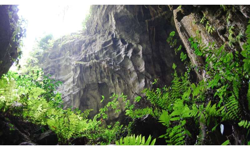 New research reveals plant wonderland inside China's caves