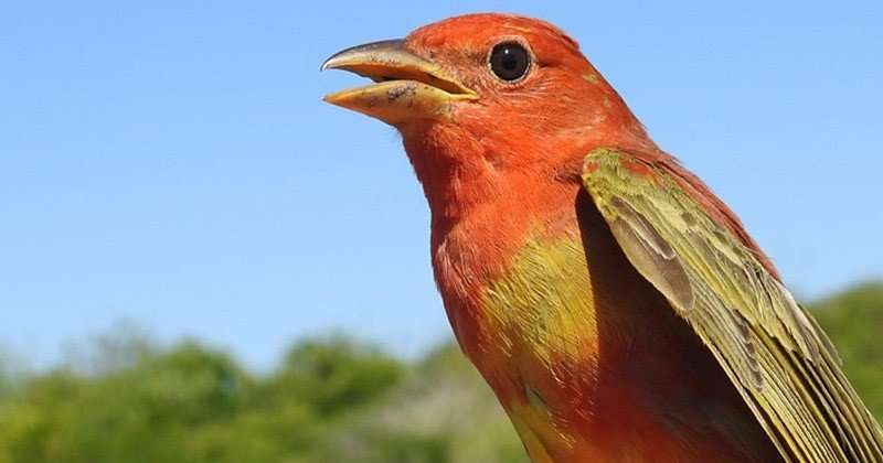 New study identifies bird migration stopover sites