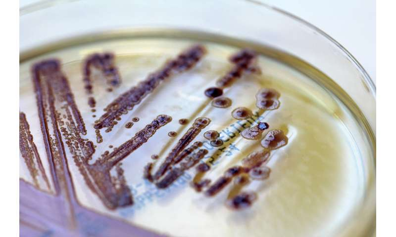 New test procedure accelerates the diagnosis of multi-resistant hospital pathogens