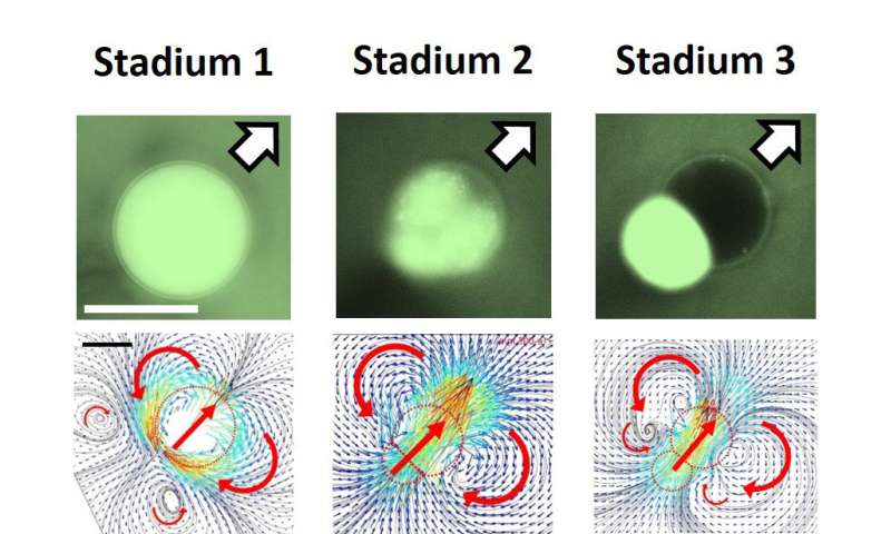 Physicists developed self-propelled droplets that can act as programmable micro-carriers