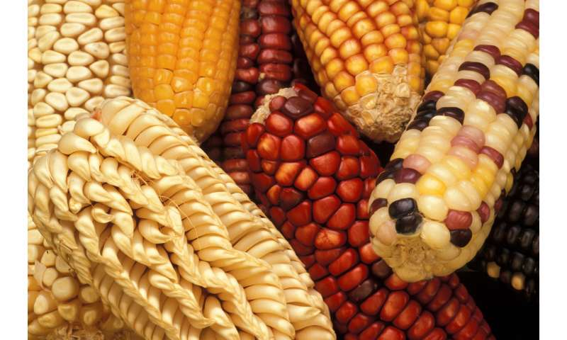 Plant genetic resources ensure ag's future