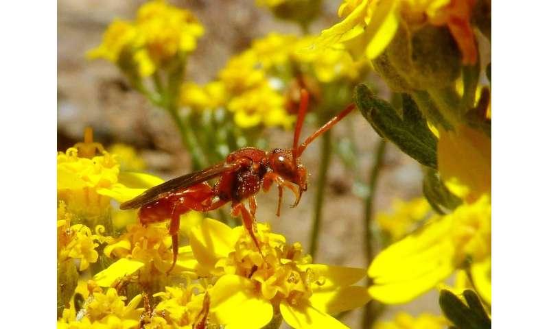 Pollinator biodiversity