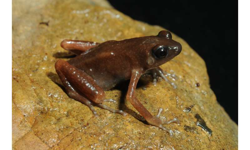 Scientists found a new genus and species of frogs