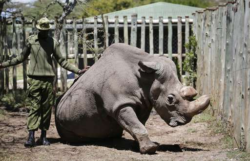Scientists hope to save northern white rhino from extinction