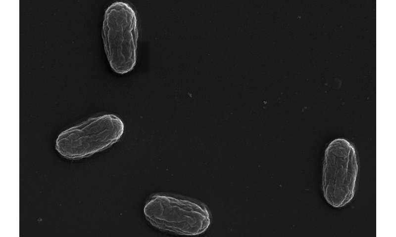 Scouting out bacterial defences to find new ways to counter-attack antibiotic resistance