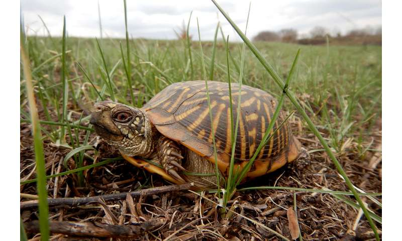 Searching for turtles in a sea of grass