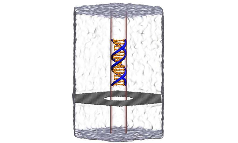 Simulations Show New Phenomenon With Nanopore DNA Sequencing