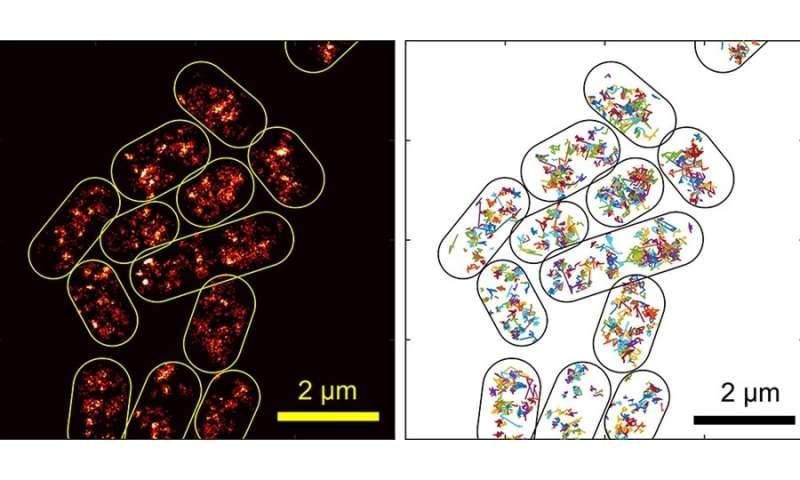 Taking a close look at bacteria