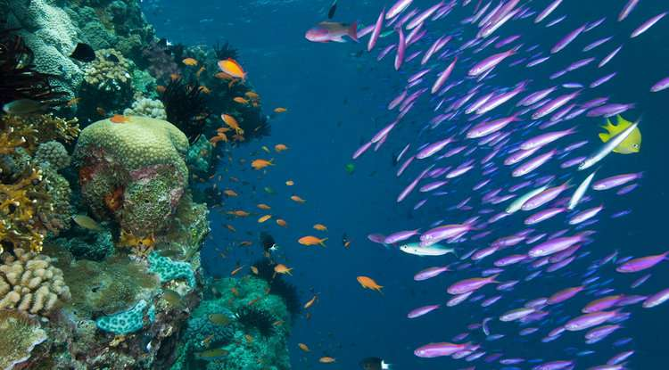The secret behind coral reef diversity? Lots of time.