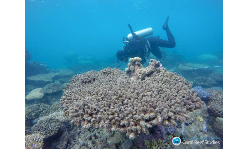 The window for saving the world's coral reefs is rapidly closing