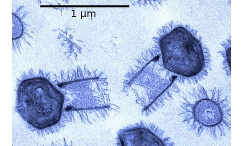 Viruses can cause global pandemics, but where did the first virus come from?