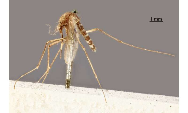Why naming all our mosquitoes is important for fighting disease