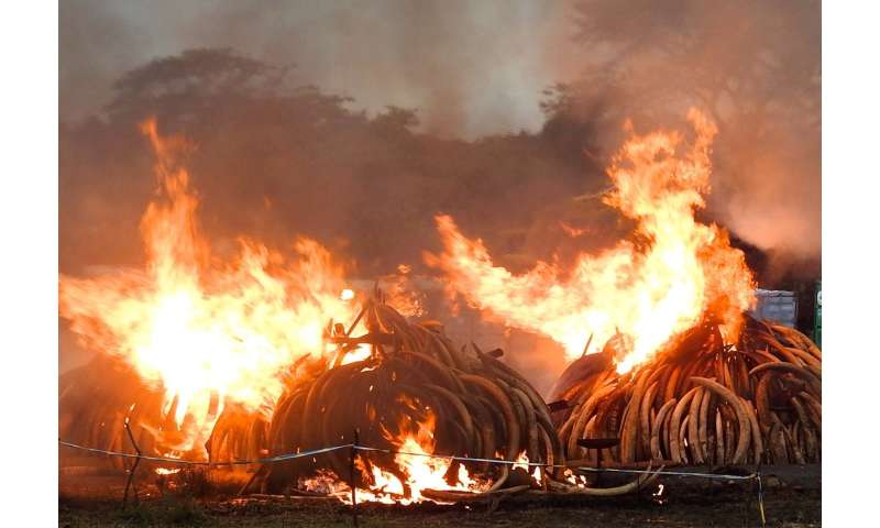 World's largest ivory burn delivered a strong message -- but who received it?