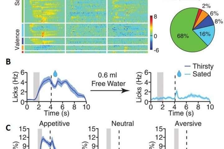 Gli scienziati scoprono il meccanismo del cervello chiave nell'elaborazione della salienza