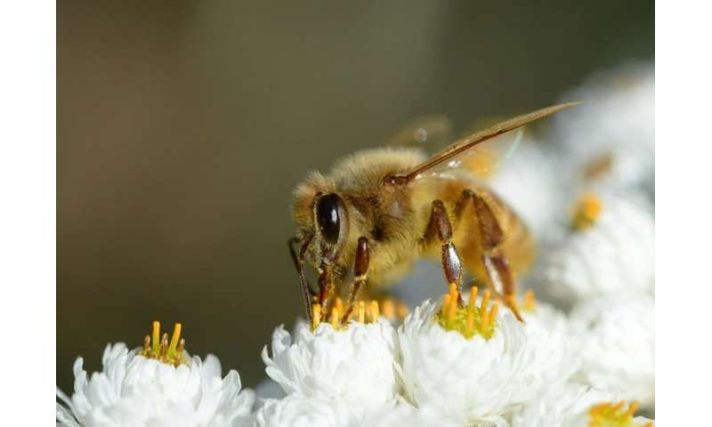Scientists warn that a predicted mass death of pollinators like bees will result in higher food prices and the risk of shortages