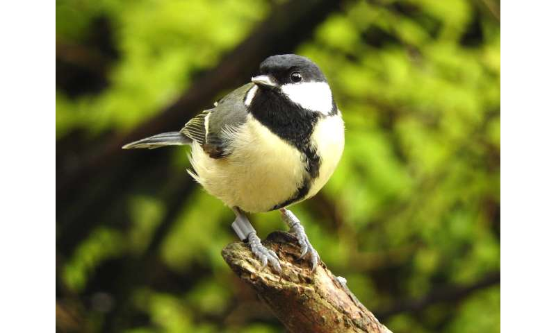 University of Oxford: Bold male birds fall faster and harder for their partners