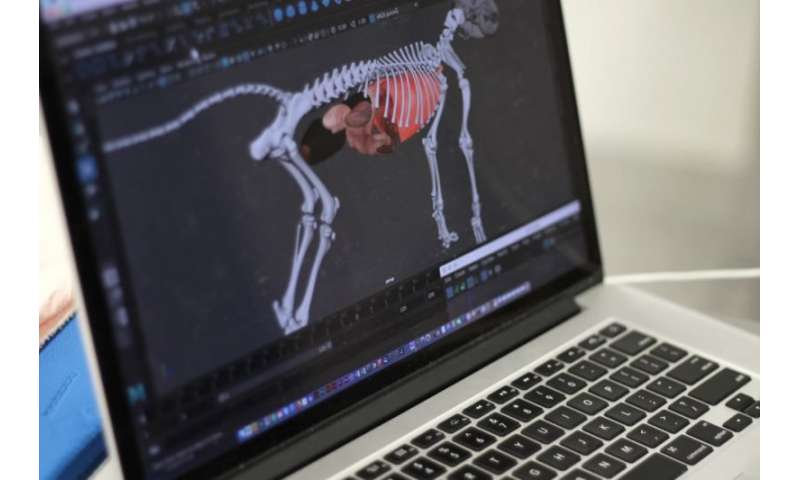 Virtual reality brings dog's anatomy to life for veterinary students