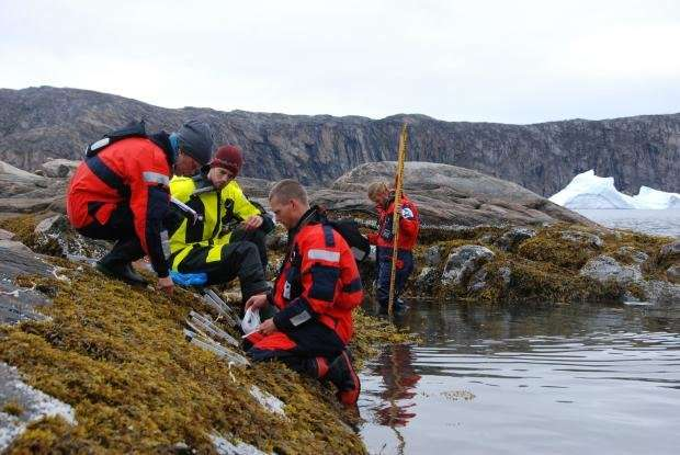 Climate change draws invasive species to the Arctic