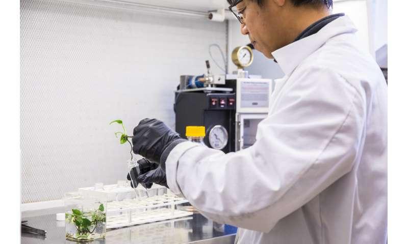 Los investigadores desarrollan una nueva planta de interior que puede limpiar el aire de su hogar