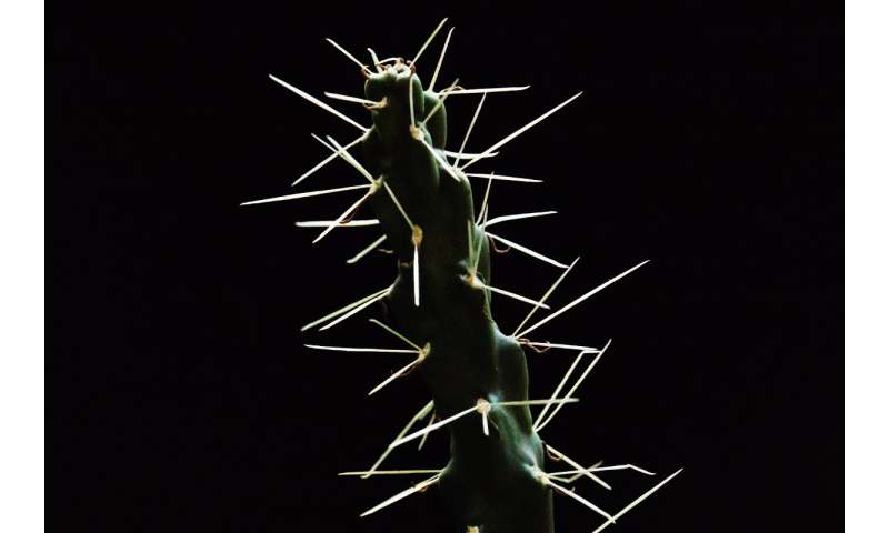 Scientists study puncture performance of cactus spines