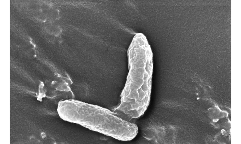 Newly discovered bacterium rids problematic pair of toxic groundwater contaminants