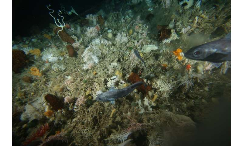 Antarctic seas host a surprising mix of lifeforms – and now we can map them