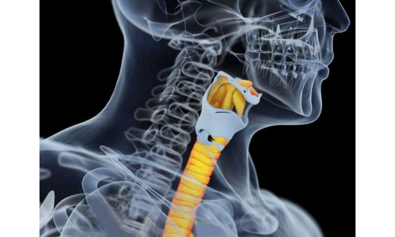 Bioengineering feasible for airway reconstruction