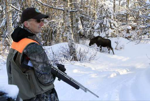 Biologists turn to citizens, DNA to count urban Alaska moose