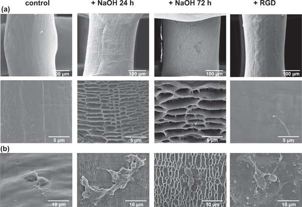 **Enhanced osteogenic activity of pre-osteoblasts on surface-modified 3D printed scaffolds