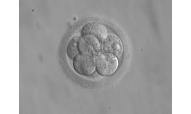 Mitochondria mutation mystery solved: Random sorting helps get rid of duds