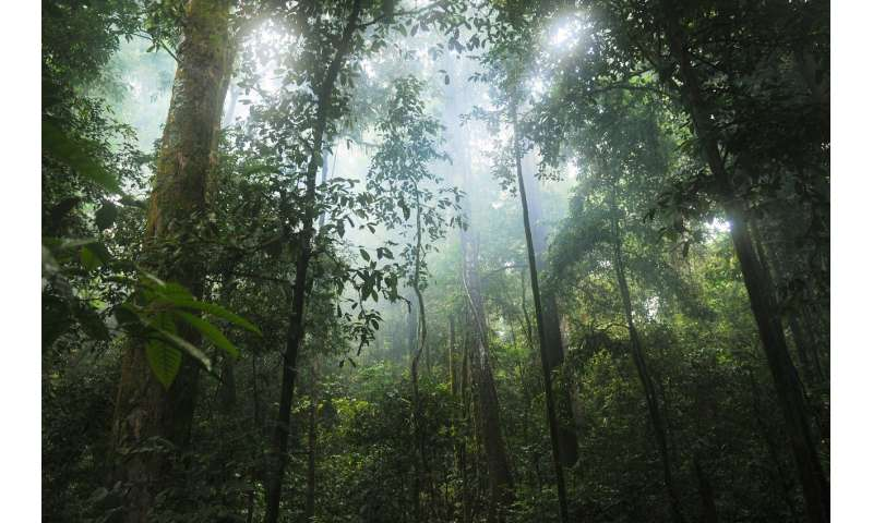 New research finds tall and older Amazonian forests more resistant to droughts