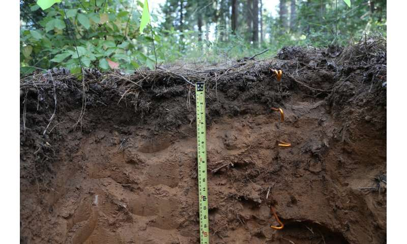 New research unravels the mysteries of deep soil carbon