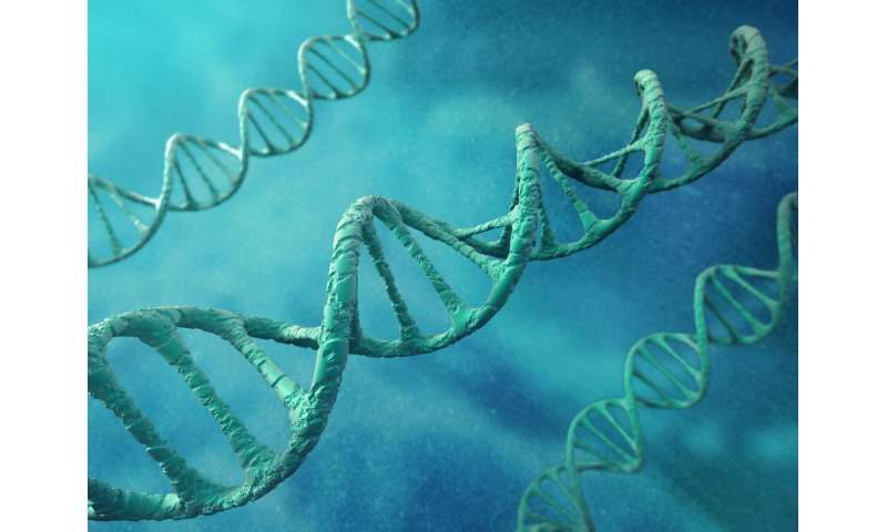 Researchers build DNA replication in a model synthetic cell