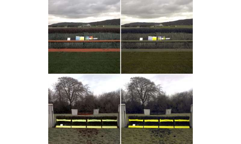 Research into equine vision leads to trial of new fence and hurdle design to further improve safety in jump racing