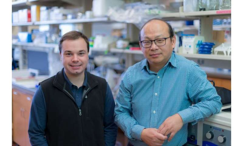 Scientists identify new target for developing precision treatment in malignant brain tumors