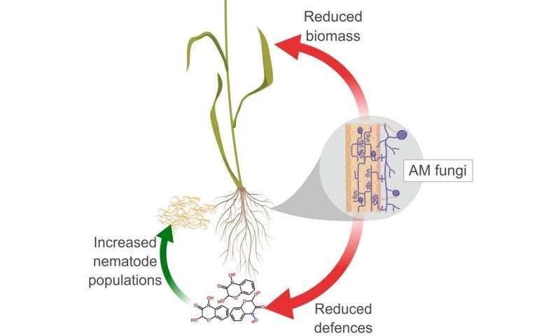 Los 'probióticos del suelo' prometen cultivos más grandes y más sanos, pero hay un inconveniente