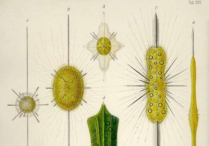 Symbiotic Plankton: Providers or Parasites?