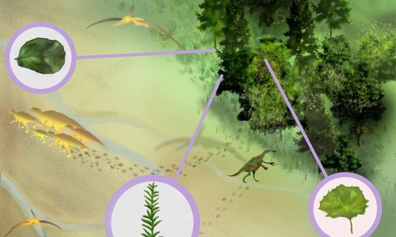Researchers add surprising finds to the fossil record