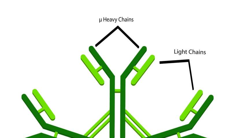 Research shows a promising new class of antibodies protects against HIV-1 infection