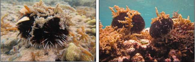 Research reveals effective method to control algae growth on Hawaiian coral reefs