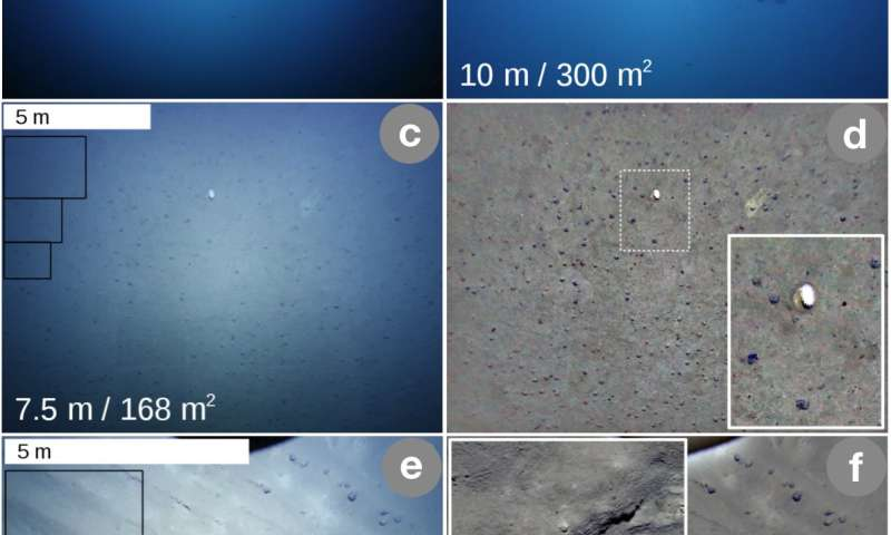 Understanding deep-sea images with artificial intelligence