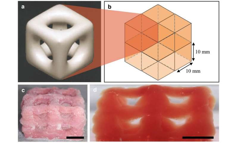 3-D printing creates super soft structures that replicate brain and lungs