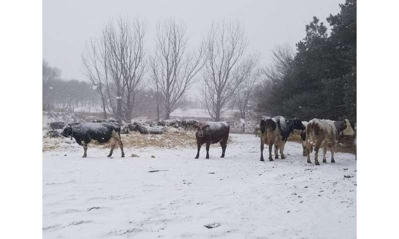 Anual, ritmos biológicos gobiernan la producción de leche en vacas lecheras.