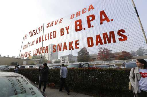 Breaching dams to save Northwest orcas is contentious issue