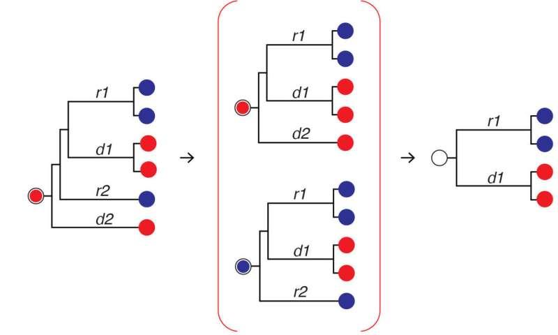 Computer simulations predict the spread of HIV